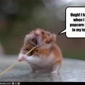 popcorn-stuck chipmunk
